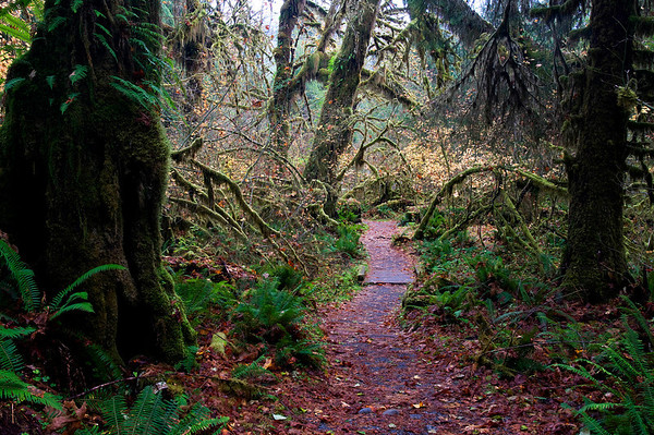 Hoh Rain Forest, Hall of Mosses Trail. 10/09